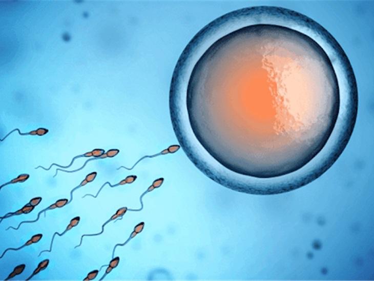FIVET (Fecondazione in vitro)