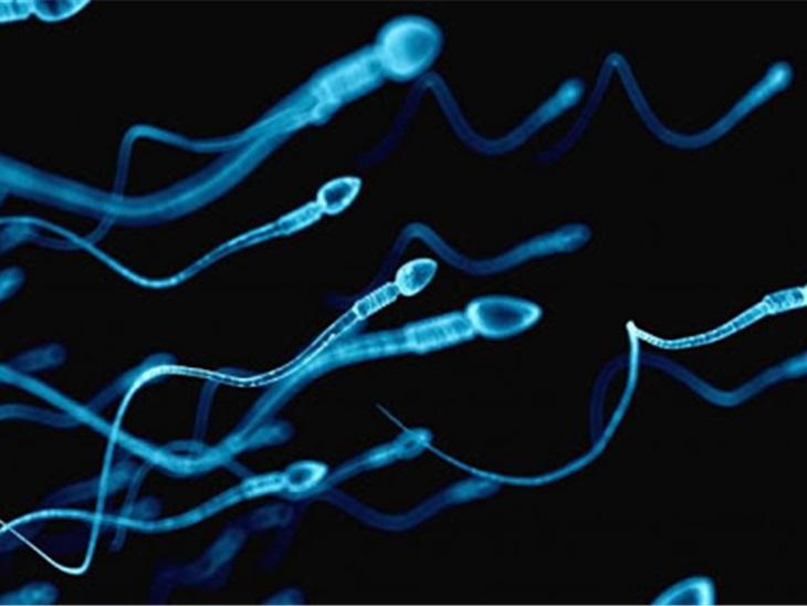 Servizio | spermiogra